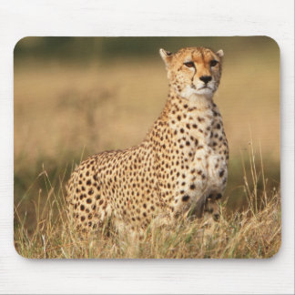 Cheetah on small mound for better visibility mouse pad