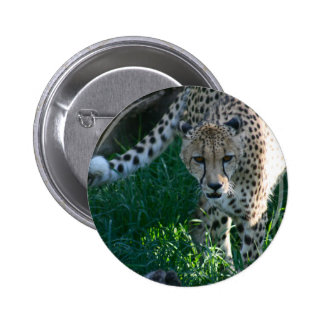 Cheetah on the Hunt Button