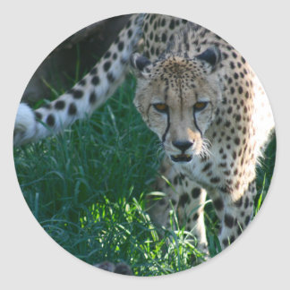 Cheetah on the Hunt Classic Round Sticker