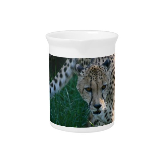 Cheetah on the hunt drink pitchers