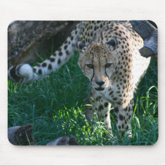 Cheetah on the hunt mouse pads