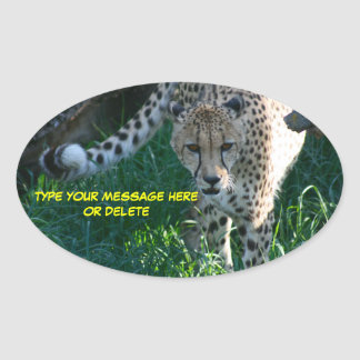 Cheetah on The Hunt Oval Sticker