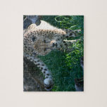 Cheetah on the hunt puzzles
