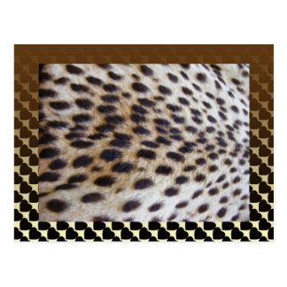 Cheetah Pelt Postcard