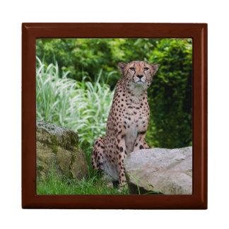 Cheetah Photo Jewelry Box