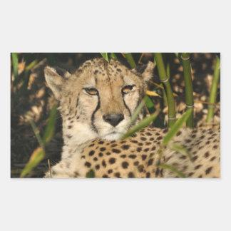 Cheetah photograph rectangular sticker