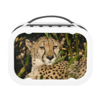 Cheetah photograph replacement plate