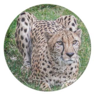 Cheetah Plates