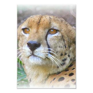 "Cheetah portrait 3.5"" x 5"" invitation card"