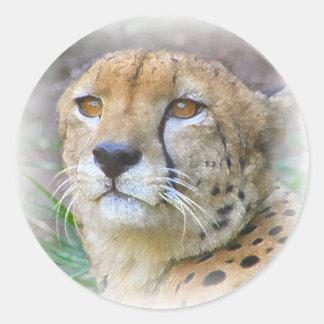 Cheetah portrait classic round sticker