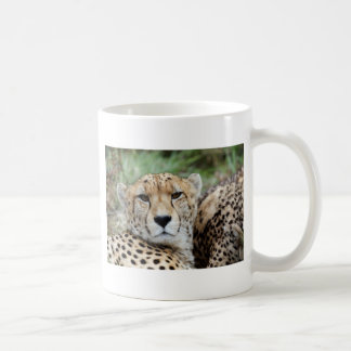 Cheetah portrait coffee mug