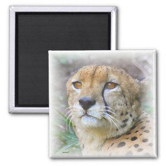 Cheetah portrait magnet