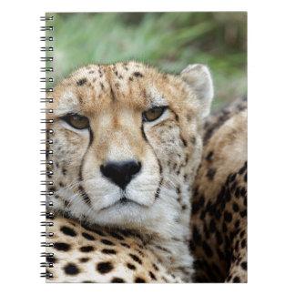 Cheetah portrait notebook