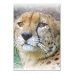 Cheetah portrait personalized invites