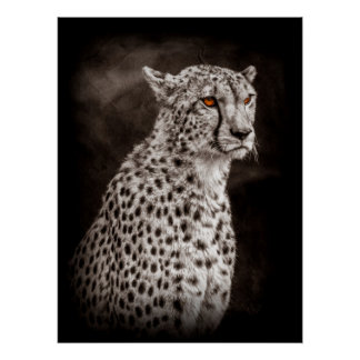 Cheetah portrait (Selective colour) Poster