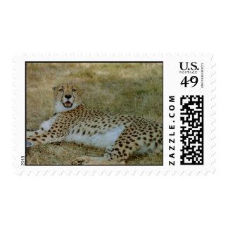 Cheetah Stamps