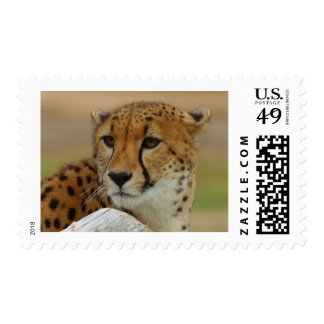 Cheetah Postage Stamps