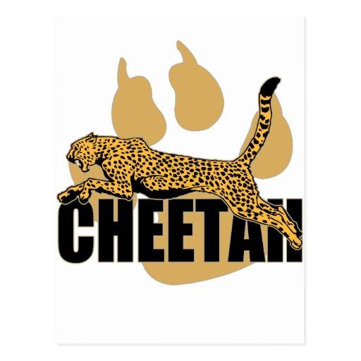 Cheetah Power Post Card