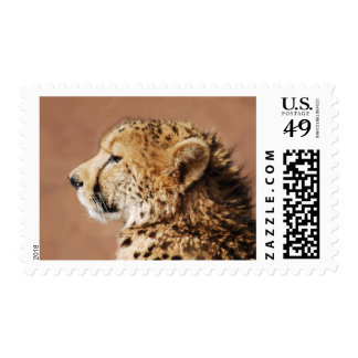 Cheetah Prince Stamps