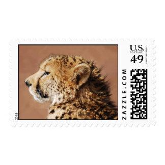 Cheetah Prince Postage Stamps