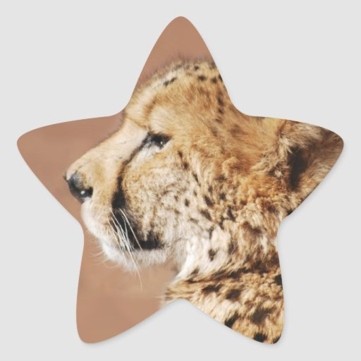 Cheetah Prince Star Stickers