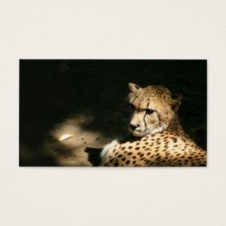 Cheetah profile card