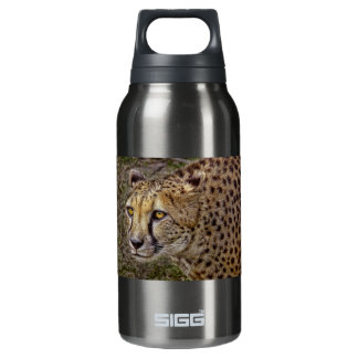 Cheetah Profile Insulated Water Bottle
