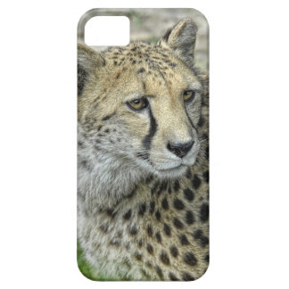 Cheetah Profile iPhone SE/5/5s Case