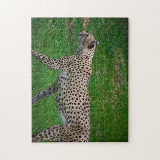 Cheetah Puzzle