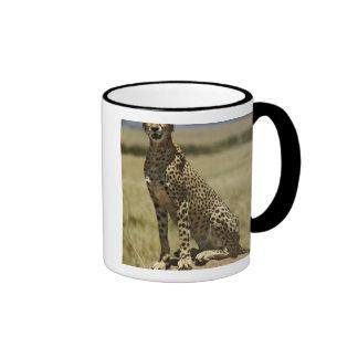 Cheetah resting, Acinonyx jubatus, Masai Mara, Ringer Coffee Mug