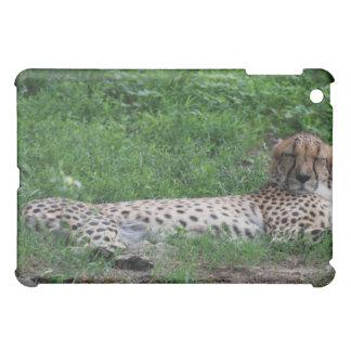Cheetah Resting iPad Case