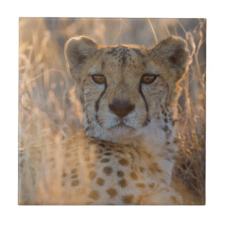 Cheetah Resting male Ceramic Tile