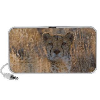 Cheetah Resting male Travelling Speakers