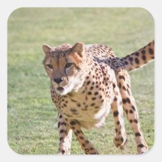 Cheetah Running Sticker
