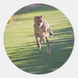 Cheetah Running Round Sticker