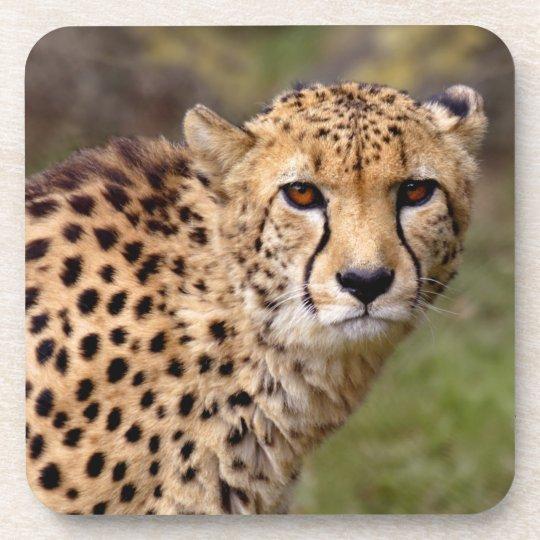 Cheetah Set of 6 Coasters