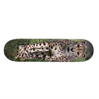Cheetah Skate Board