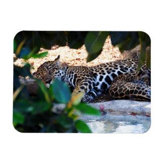 Cheetah Sleep ZzzzZzzzzzZzzz Premium Flexi Magnet