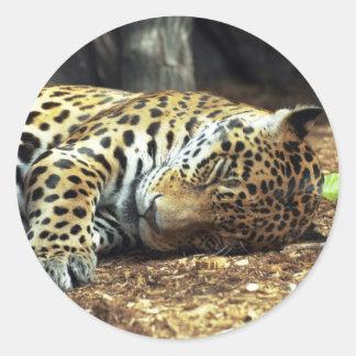 Cheetah Sleeping Round Sticker