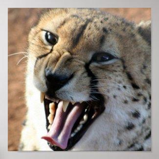 Cheetah Snarl Poster