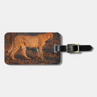 Cheetah South Africa at Sunset Bag Tag