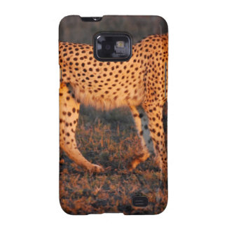 Cheetah South Africa at Sunset Samsung Galaxy S2 Cases