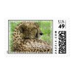 Cheetah Stamp