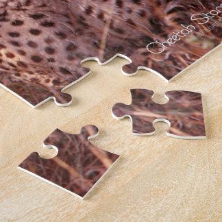 Cheetah Stare Jigsaw Puzzle