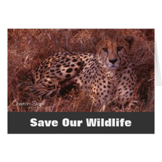 Cheetah Stare, Save Our Wildlife Greeting Card