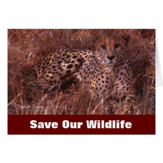 Cheetah Stare Save Our Wildlife Greeting Card