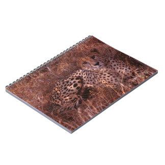 Cheetah Stare Spiral Notebook