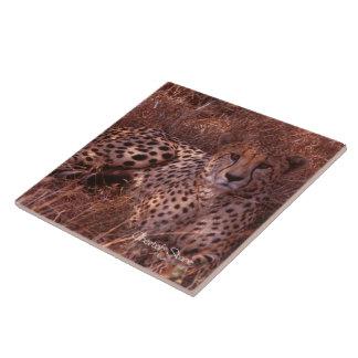 Cheetah Stare Tile