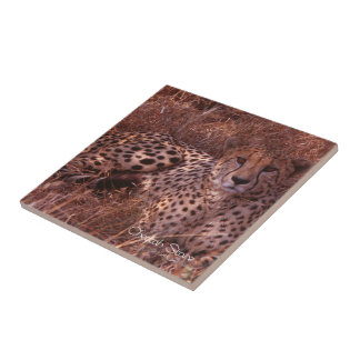 Cheetah Stare Tiles