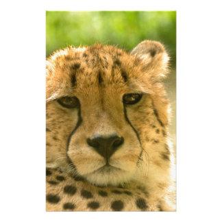 Cheetah Stationery